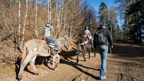 Reportage famille balade à dos d'âne Col de Menté